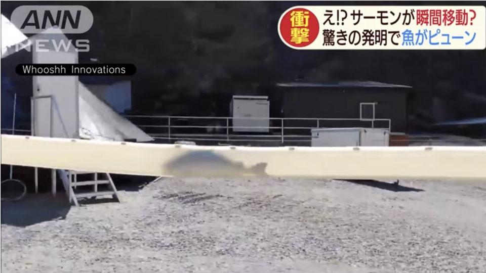 話題の動画【サーモンキャノン】魚が瞬間移動する装置とは?