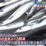 秋刀魚が歴史的不漁の恐れ 去年より3割減
