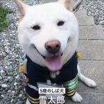 【しば犬】雪太郎 制服姿で児童を見守り