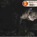 【救出作戦!】街路樹から下りられニャい!猫の命運やいかに