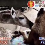 【キリンの赤ちゃん】回復のウラに献身愛