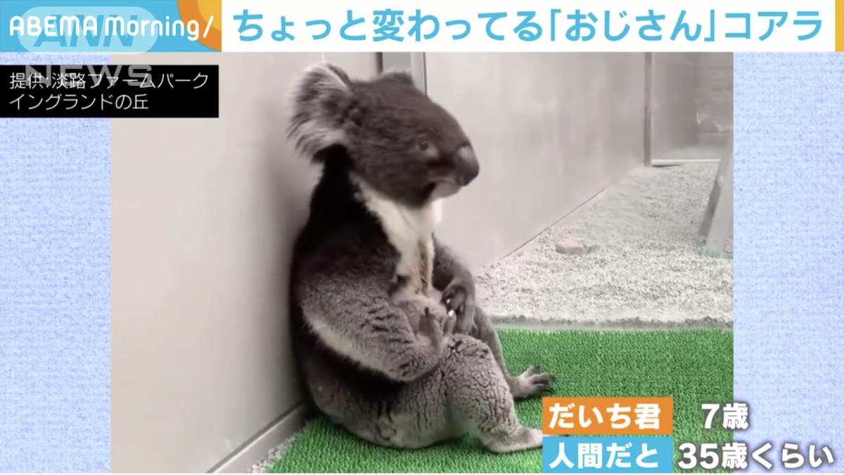 ほっこり映像!おじさんコアラに可愛すぎるカピバラ